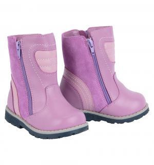 Сапоги , цвет: фиолетовый Зебра