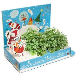 Набор для выращивания  Зелёного Нового года Happy Plant
