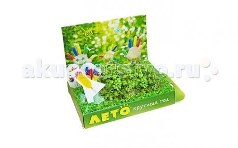 Подарочный набор Живая открытка Лето круглый год Happy Plant