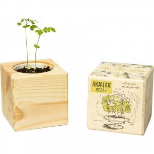Набор для выращивания Акация, Экокуб