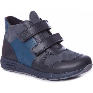 Ботинки  для мальчика Dandino. Цвет: синий