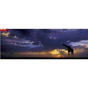 Пазл Heye A. von Humboldt Закат, 1000 деталей, панорама