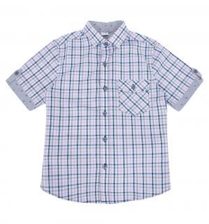 Рубашка , цвет: розовый/фиолетовый Tsarevich